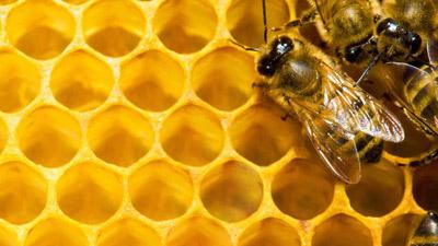 """Nachlese """"Treffpunkt Bienengesundheit"""""""