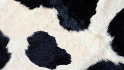 """Nachlese """"Treffpunkt Rindergesundheit"""""""